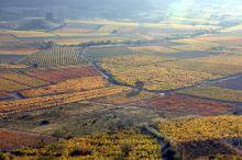 séminaire viticole